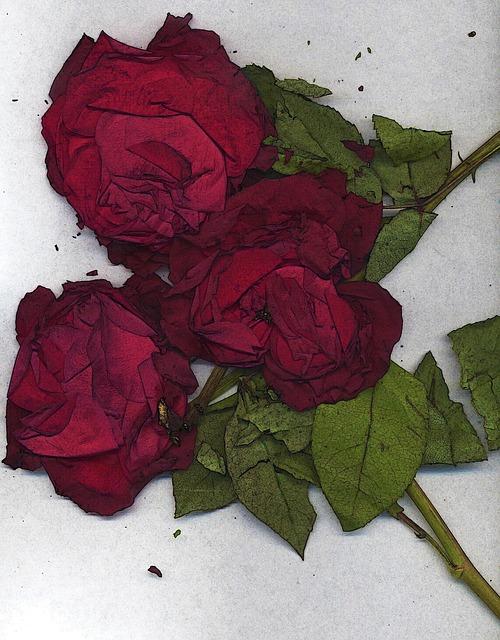 roses-乾燥