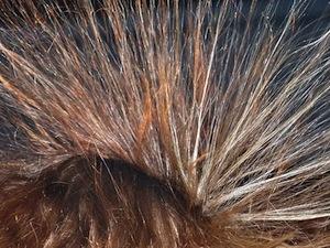 hair-113313_640